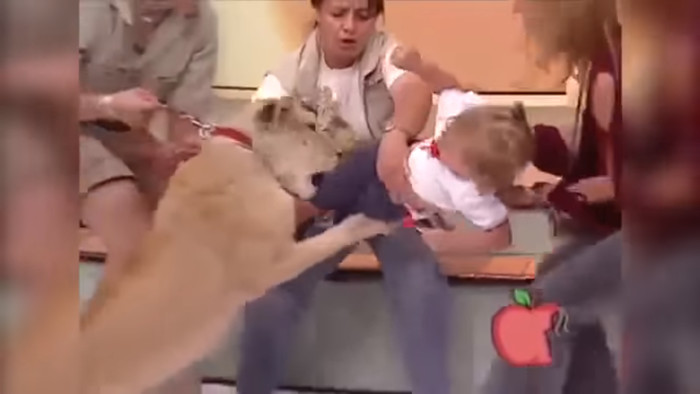 Lion attacks baby