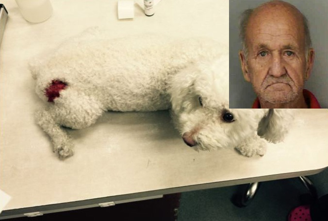 Naked Florida man let 5 dogs attack Bichon Frise, called