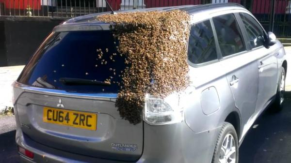 Bee infestation, Tom Moses/Facebook