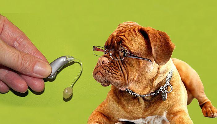 hearing aid dog 911 call emergency